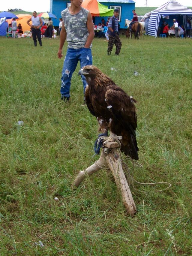 An eagle contemplates his life.